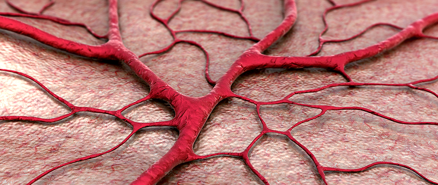 What Happens to Our Blood Vessels as We Age